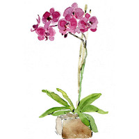 Orchid plant original watercolor painting, Radiant orchid, purple and grern, art, zen, calm, wall art , minimalist art, home and garden