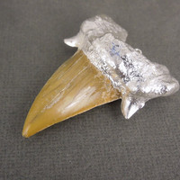 HANDMADE Large Fossil Shark Tooth with Sterling Silver Electroplated Cap Pendant STUNNING (S3B1-07)