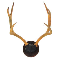 6-Point Deer Rack on Plaque