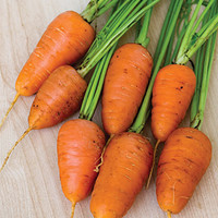 Caracas Hybrid Carrot Seeds - Vegetable Seeds and Plants at Burpee.com