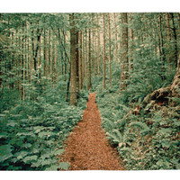 Forest Trail Wall Tapestry at Art.com