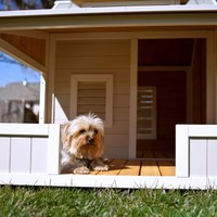 Precision Pet Outback Savannah Dog House with Porch 2713-27123 | www.hayneedle.com