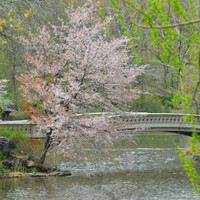 Central Park Bow Bridge in Springtime » Craftori
