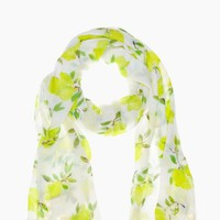 illustrated lemon scarf