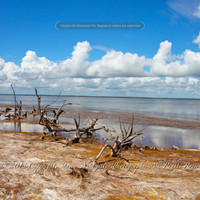 Seascape Photography - Driftwood on Shore - Beach Landscape Photography - Coastal Wall Art