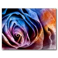 Colorful Acrylic Textured Rose Postcard