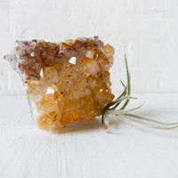 LIVE Fuzzy Air Plant on Light Citrine Crystal Garden - Druse Mineral - Gardener Naturalist Gifts - Nature Planter - Unique Home Decor