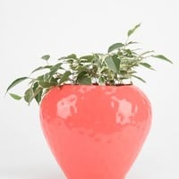 Plum & Bow Strawberry Planter - Urban Outfitters