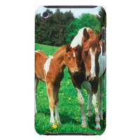 Pied mare with foal in a meadow 2