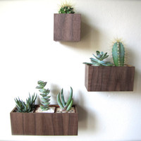"SET of THREE Wall Planters, Hanging Planters, in WALNUT wood, includes 3""x3""x3"", 5""x3""x3"", and 8""x3""x3"" sizes, air plants sold separately"
