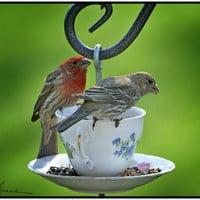 Droversford: Tea Cup Bird Feeder Craft