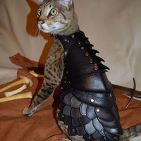 Battle Armor For Cats | Incredible Things
