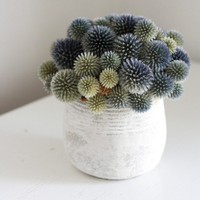 spring thistles by floresdelsol on Etsy