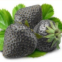 50 Seeds Black Strawberry Fruit Strawberry Seeds