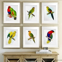 Antique Bird Prints set of 6 colorful Tropical Parrots Orange Yellow Green Ornithology Wall Art Prints dining room decor wall hanging 8x10""