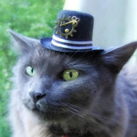 Cat Steampunk Hat