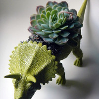 Moss Green Dinosaur Planter Modern Centerpiece by CoastalMoss