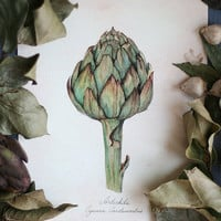 Watercolor Botanical Illustration. Artichoke. Art Print
