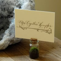 Moss Place Card Holder Mini Terrarium by Vertegris