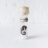 Real Sea Horse Perserved in Sea Salt Glass Cork by EarthSeaWarrior