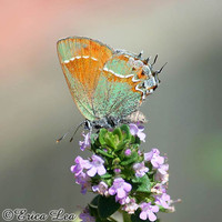 5x7 Butterfly Photo nature decor green orange by NatureVisionsToo