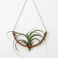 Hanging Air Plant Cradle (tm) - Natural TerraCotta 3