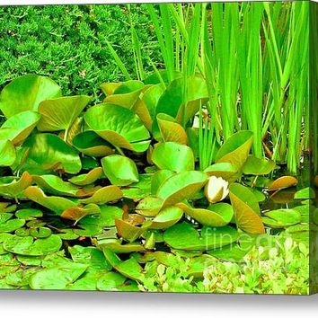Pond The Color Of Green Acrylic Print