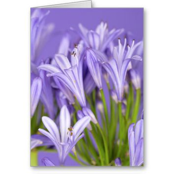 Beautiful Purple Agapanthus Greeting Card