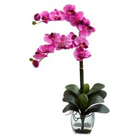 "Double Stem Phalaenopsis Orchid in Glass Vase 27"" - Assorted Colors"