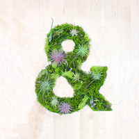 """Ampersand"" Garden 