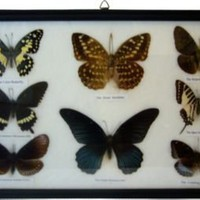 Framed Butterflies - One Kings Lane - Vintage & Market Finds - Wall Decor