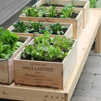 wine box salad garden | going home to roost