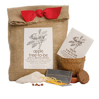 APPLE TREE TO BE KIT | Grow Your Own Apples With This Apple Seed Kit | UncommonGoods