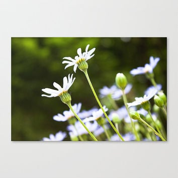 Spring Green White Flower fine art photography Floral Flora Botanical Petals Nature Bokeh Macro Bright home living wall decor gift under 50