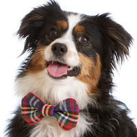 The SMALL Tartan Dog Bow Tie An adorable by CharlieHeartsDiesel