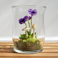 Tiny Purple Pansy Woodland Terrarium In Repurposed Glass | Luulla