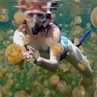 Jellyfish Lake, island of Eli Malk in Palau