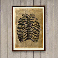 Rib cage decor Medical print Anatomy poster Old dictionary