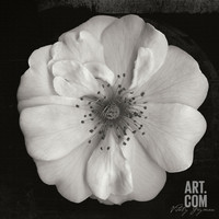 Classic Beauty Square Photographic Print by Vitaly Geyman at Art.com