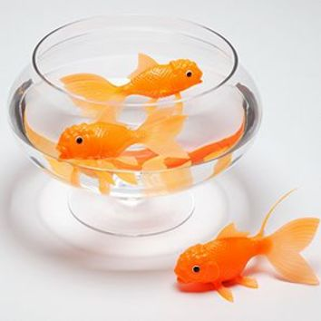 Light up Koi Toy   Games & Toys   Gifts   Z Gallerie