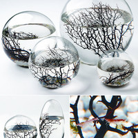 EcoSphere - Selfcontained Aquatic Ecosystem - Pure Modern Design Lifestyle Objects