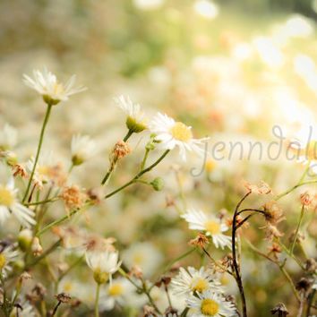 Summer's End - PHOTO,  flower photography, citrus, soft gold, green pastel, sunlight, woodland floral decor, yellow and green