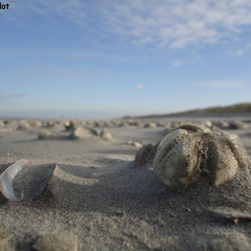 Nature photography: Beach landscape, beach Ameland, digital photography, beach with shells, island photography, gift idea, for her, for him