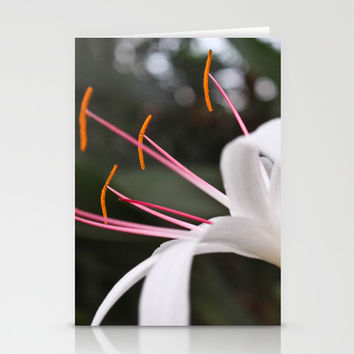 White Lily Stationery Cards by Legends of Darkness Photography