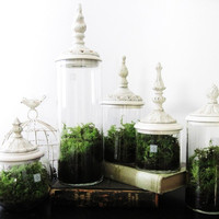 Terrariums. Green Decor