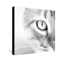 Bree Madden Cats Eye Gallery Wrapped Canvas