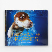 Underwater Puppies By Seth Casteel