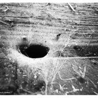 Spider Web Grunge Tunnel Wood  Debris Black White Photography Print
