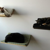 Supermarket - Curve wall mounted pet bed - Walnut from Akemi Tanaka