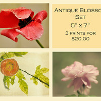 SALE Discount 5 x 7 Set - Antique Blossom Shabby Chic Home Decor Nature Flower Vintage Style Wall Art - Christmas in July